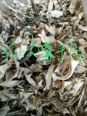 云南省大理白族自治州祥云县食用仙人掌 5公分以下