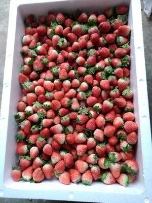 江苏省徐州市贾汪区甜查理草莓  20克以下 鸡心果  各种型号