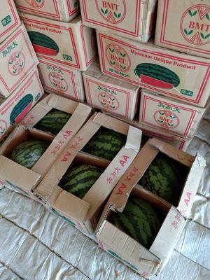 云南省德宏傣族景颇族自治州瑞丽市缅甸西瓜 10斤打底 10成熟 1茬 有籽
