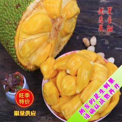 海南省海口市琼山区海南菠萝蜜 26-30斤菠萝蜜!