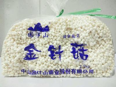 广东省中山市中山市白金针菇 未开伞 1.5cm以下 10cm以下 一级