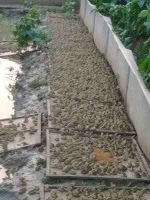 安徽省蚌埠市淮上区青蛙