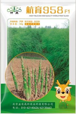 北京海淀区芦笋种子  袋装 航育958粗壮高产
