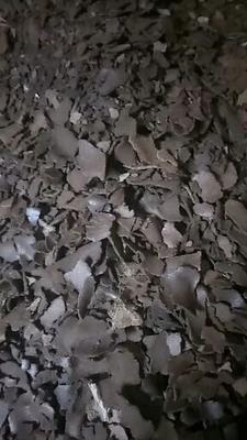 湖南省永州市零陵区茶枯