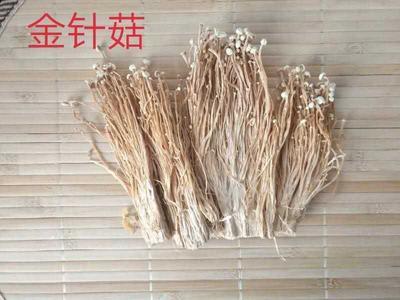 河南省洛阳市伊川县黄金针菇 未开伞 1.5cm以上 10cm~13cm 一级