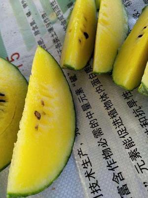 江苏省宿迁市沭阳县小兰西瓜 5斤打底 8成熟 1茬 有籽