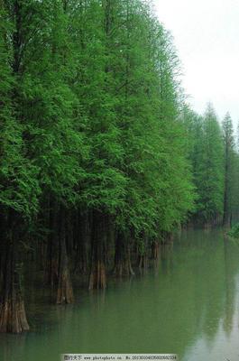 湖北省恩施土家族苗族自治州建始县普通水杉