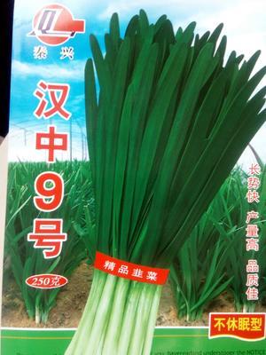 河南省周口市西华县韭菜种子 袋装 袋