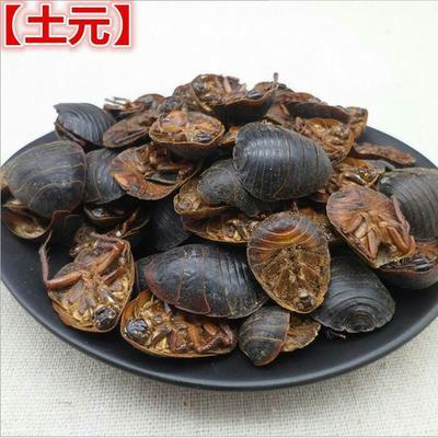 安徽省亳州市谯城区野生土元  土鳖虫,干货一斤包邮