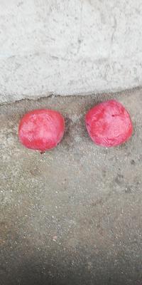 陕西省西安市蓝田县火晶柿子 3 - 4两以上