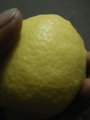 重庆潼南县尤力克柠檬 5 - 6两