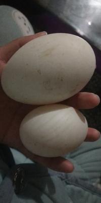 江苏省徐州市泉山区白鸭蛋 食用 散装