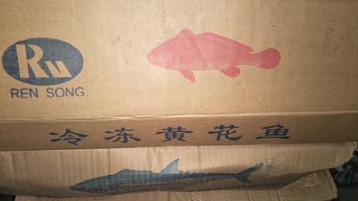 山东省青岛市即墨市小黄鱼 野生 0.5公斤以下