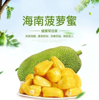 海南省海口市美兰区海南菠萝蜜  15斤以上 约22斤一个