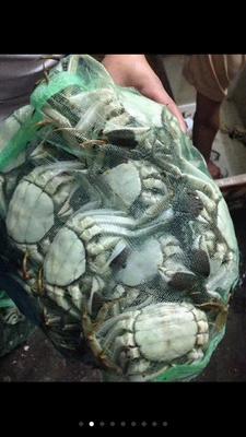 这是一张关于洪湖大闸蟹 公蟹 2.0-2.5两 的产品图片