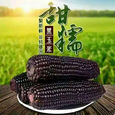 吉林省松原市宁江区黑玉米 去壳 甜糯