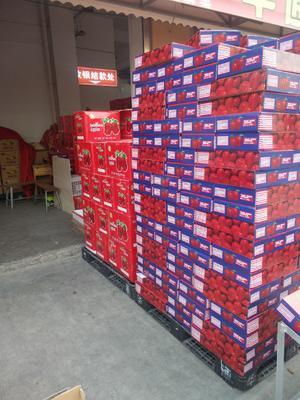 山东省临沂市兰山区红蛇果 300-400克