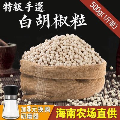 海南省海口市美兰区白胡椒