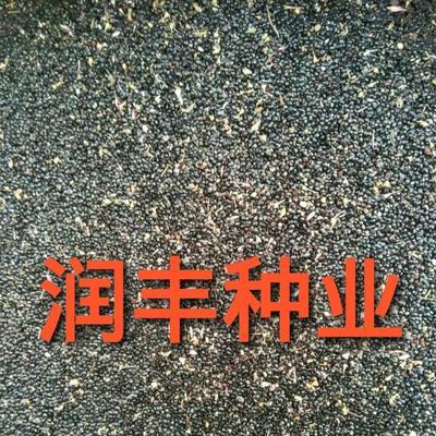 河北省保定市安国市普通鸡冠