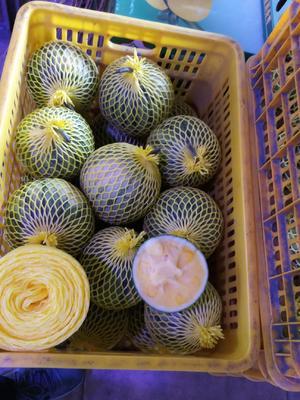 广东省汕尾市海丰县特小凤西瓜 3斤打底 8成熟 1茬 无籽