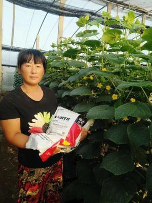 山东省潍坊市寿光市蔬菜专用有肥