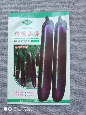 河南省周口市扶沟县茄子种子 杂交种 ≥95%