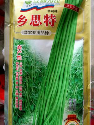 江苏省宿迁市沭阳县乡思特长豆角种子 ≥95%