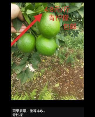 广西壮族自治区南宁市良庆区青柠檬 2 - 2.6两