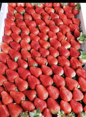 江苏省南京市下关区奶油草莓 30克以上