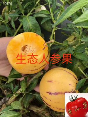 青海省西宁市城北区圆果 <2两