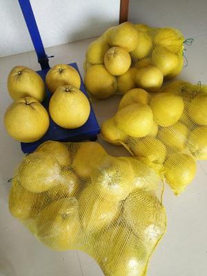 这是一张关于马家柚 3斤以上 的产品图片