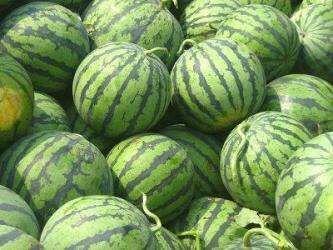 河北省邢台市威县龙卷风西瓜 8斤打底 8成熟 1茬 有籽