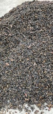 这是一张关于斑蝥虫 的产品图片