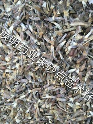 这是一张关于苍术 的产品图片