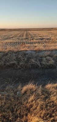 这是一张关于水田 转包 30~50年 1万亩以上 的产品图片
