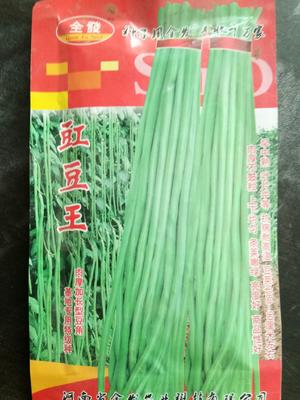 河南省新乡市原阳县长青豆角种子 ≥85%