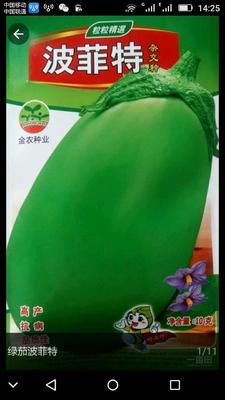 河南省周口市西华县茄子种子  杂交种 ≥95% 绿茄波菲特