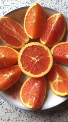 重庆万州区红肉脐橙 65 - 70mm 4-8两
