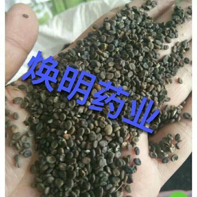 这是一张关于棉黄芪种子 的产品图片