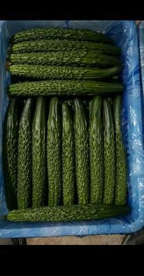 这是一张关于刺黄瓜 25~35cm 的产品图片