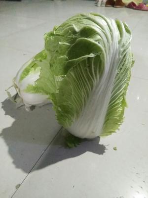 这是一张关于秦白2号 3~6斤 净菜 的产品图片
