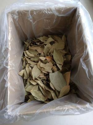 这是一张关于甜茶 的产品图片
