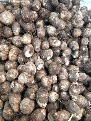 这是一张关于毛芋头 通货 的产品图片