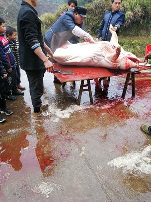 湖南省永州市江华瑶族自治县土猪肉 生肉