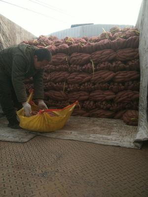 这是一张关于济薯26号红薯 混装通货 红皮 的产品图片