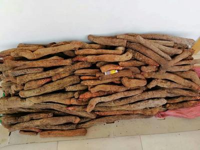 湖南省长沙市岳麓区锁阳 散装 全根 干燥