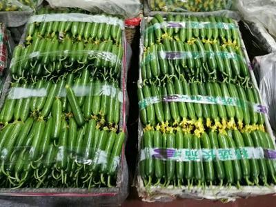 这是一张关于小黄瓜 15cm以下 的产品图片