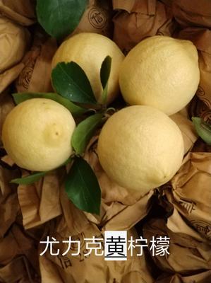 重庆万州区黄柠檬  1.6 - 2两 尤力克柠檬套装果