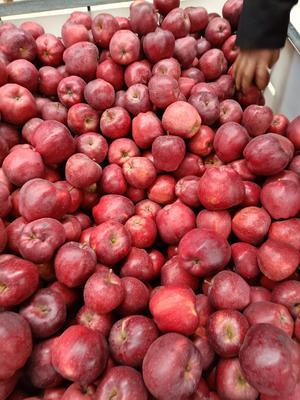 这是一张关于花牛苹果 70mm以上 全红 光果 的产品图片