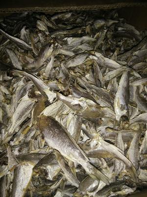 山东省威海市荣成市小黄鱼 野生 0.5公斤以下